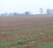 New Country Park Feasibility study