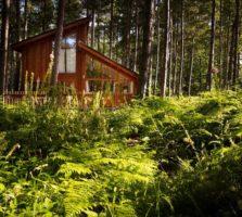 forest-holidays-sherwood