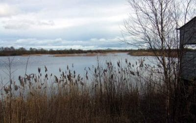 Business Planning, Shapwick Heath National Nature Reserve