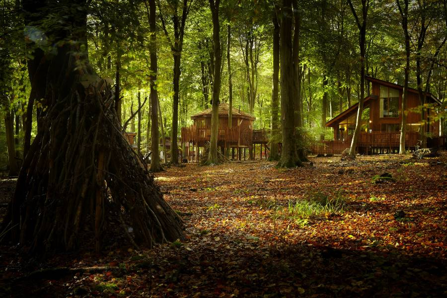 Site Development and Business Planning, Forest Holidays