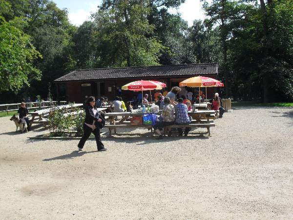 Cafe Feasibility Study Country Park